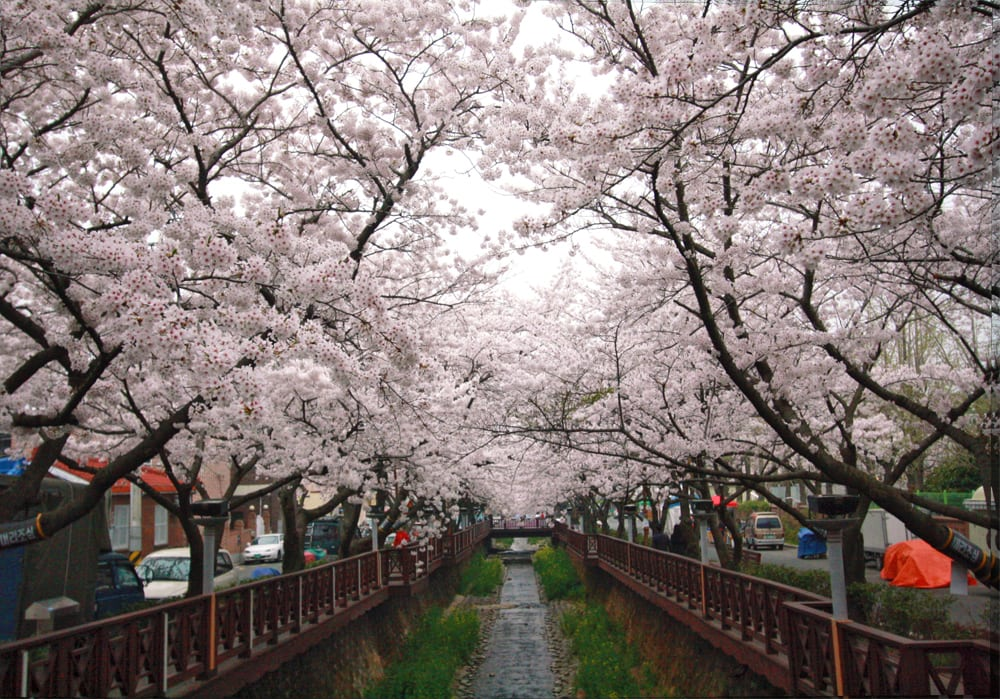 Yeojwa Stream, Jinhae. Photo by Avalyn!