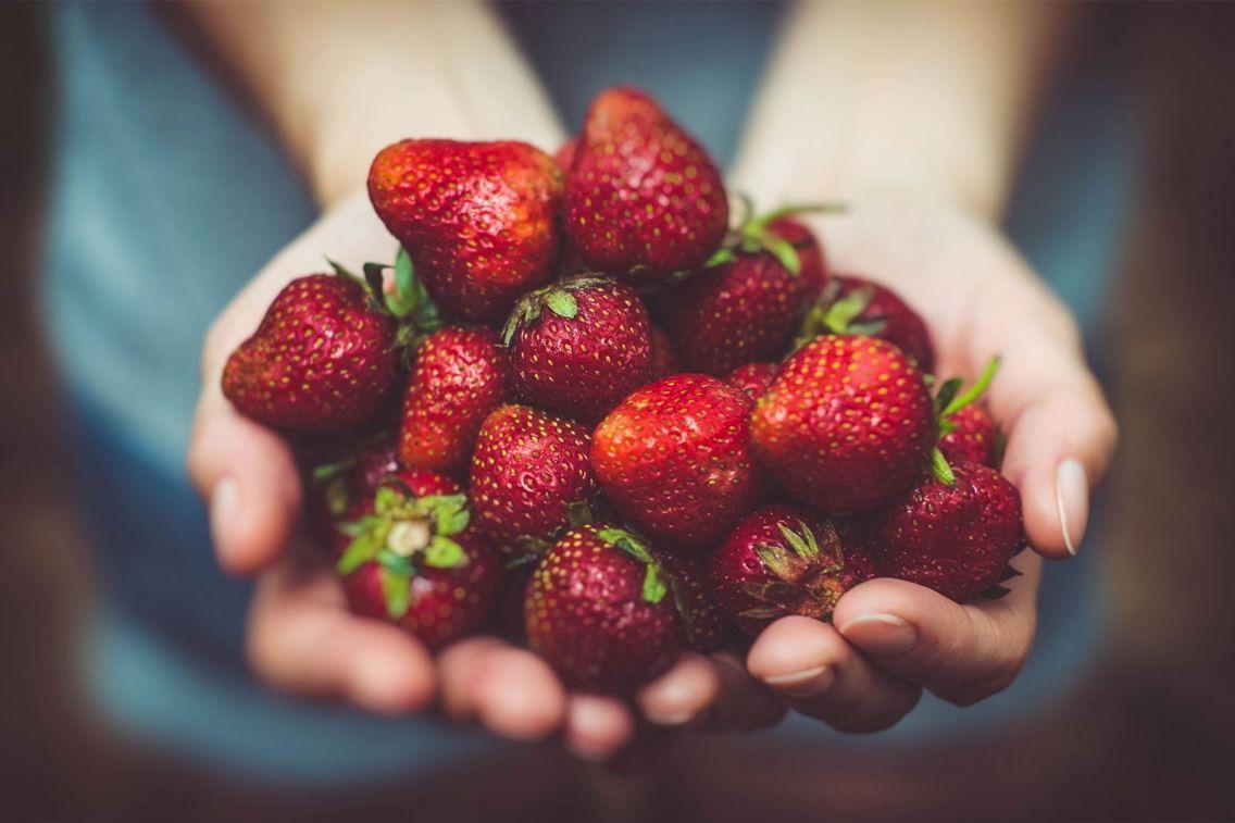 Strawberry picking. Photo: Artur Rutkowski / Unsplash