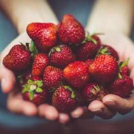 Strawberry picking. Photo: Artur Rutkowski / Unsplash