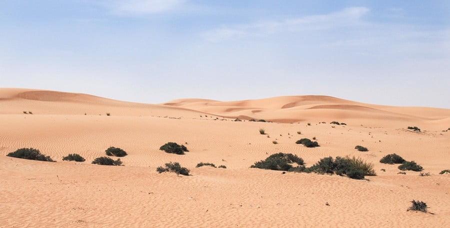 From Dawn to Dusk: Vast Wonders on a Dubai Desert Safari