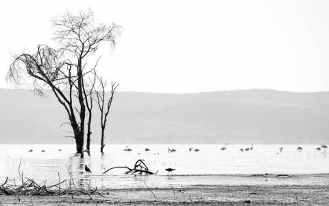 Morning at Lake Nakuru, Kenya