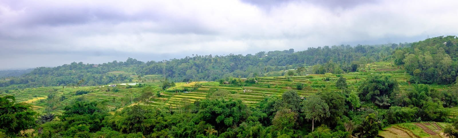 Panorama of Pacung rice terraces in Bedugul, Bali