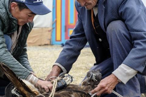 Kazakh Neighbors Wrapping Eagle