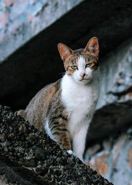 Jiufen, Taiwan. Mama cat.