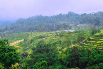 Rice terraces in North Bali, Indonesia