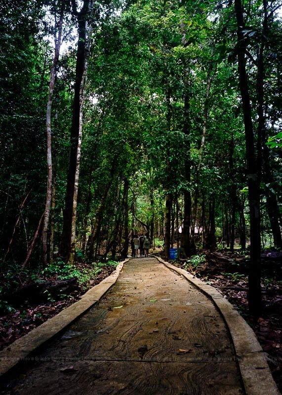 Peramun Hill forest, Belitung