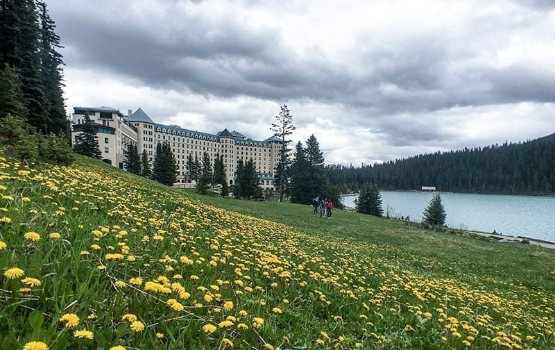 Field of dandelions at Lake Louise. Photo: James Tan